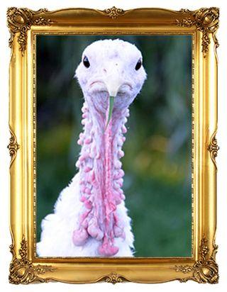 Adopt-a-turkey-victoria